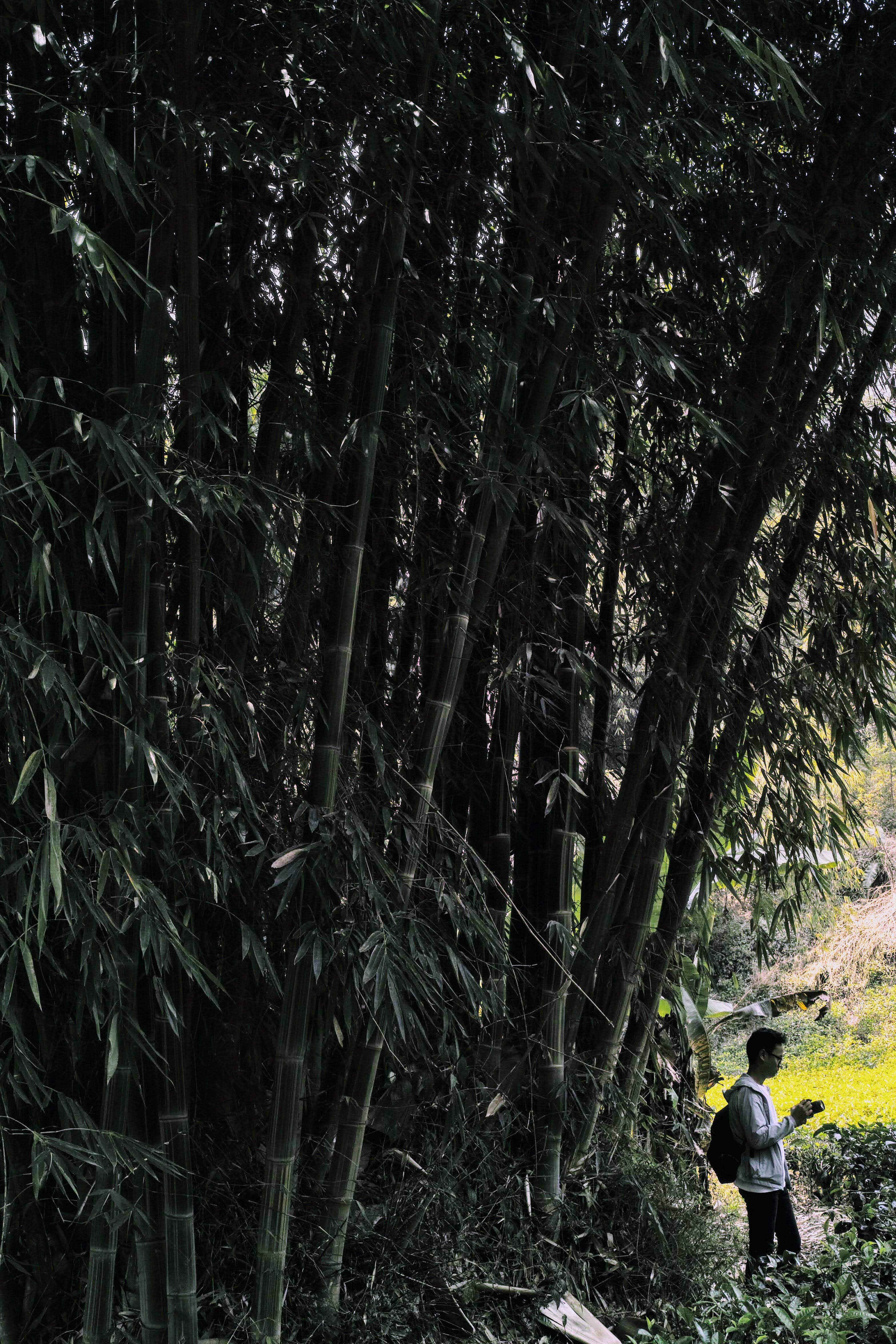 Bambu on Malabar Mountain DP2M0427